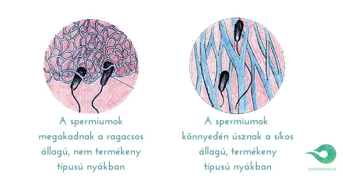 spermiumok a nyákban